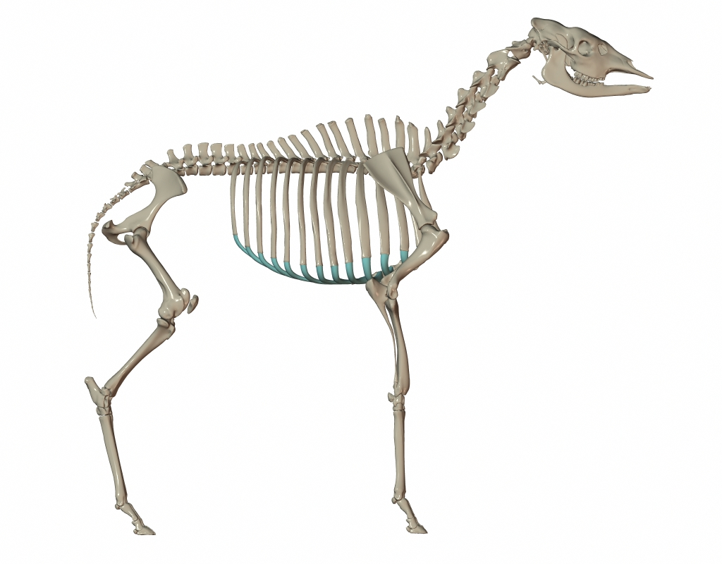 RenderSkeleton